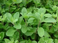 Dry Herbal Marjoram - 1kg